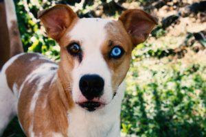 犬の角膜炎について