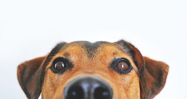 犬の適切な食事の量や回数