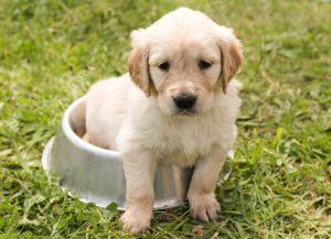 子犬の食事回数