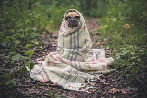 ペットに 安心 消臭剤はどれ?