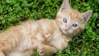 猫ニキビについて